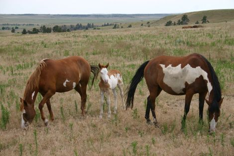 Wild Horse Sanctuary, South Dakota